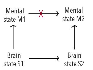 brain-states