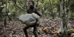 Child labour in West Africa